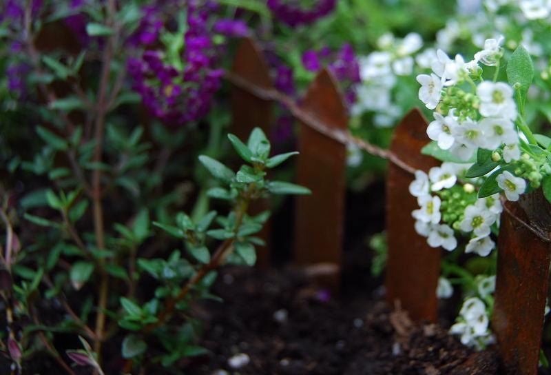 Garden0001_12