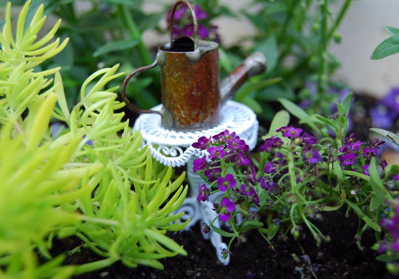 Garden0001_11