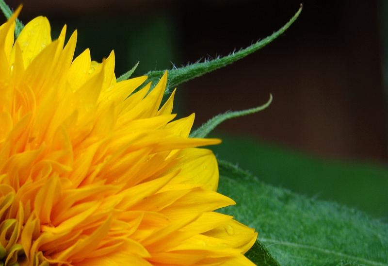 Yellow0001_7