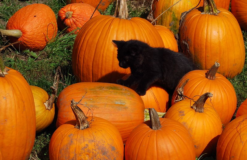 Halloween0001_17