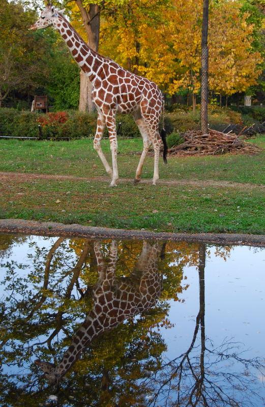 Zoo0001_5