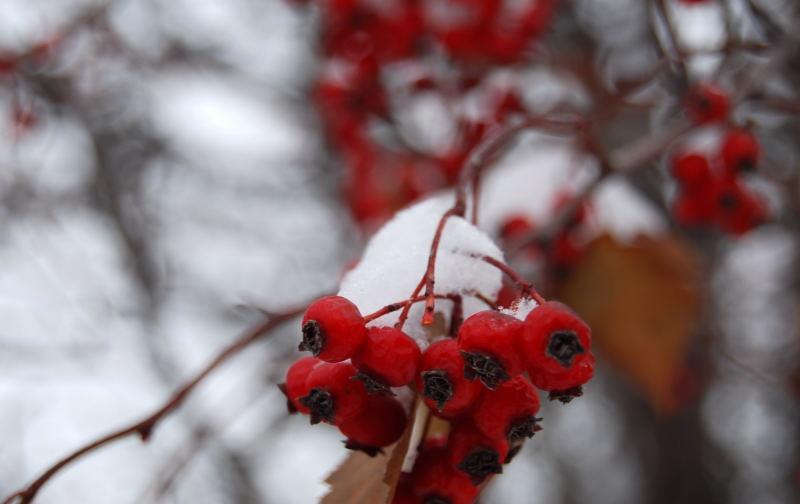 Snow0001_4