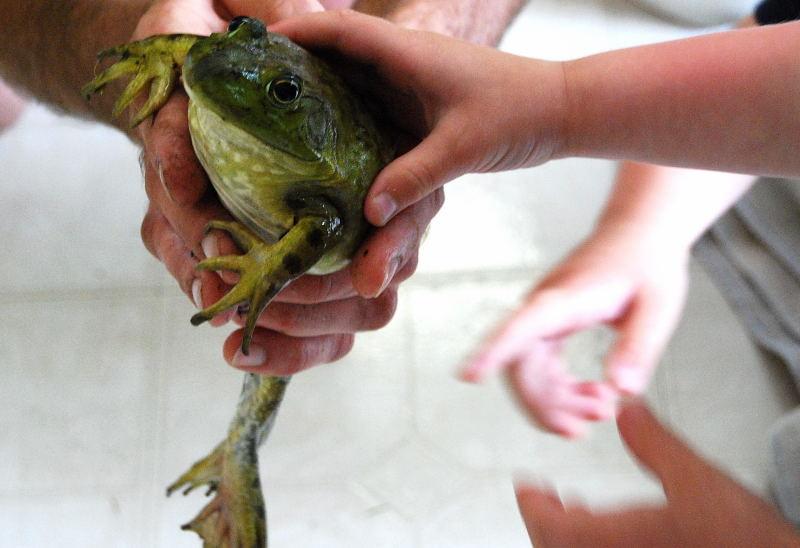 Frog0001_15