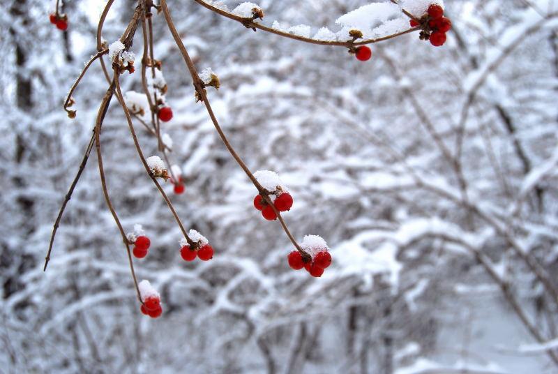 Christmas 090001_32