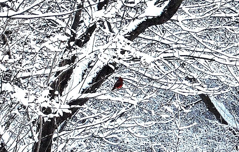 Christmas 090001_24