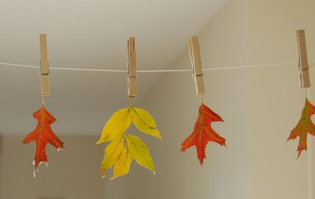 Leaves0001_13