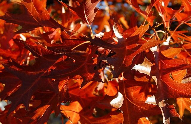 Leaves0001_16