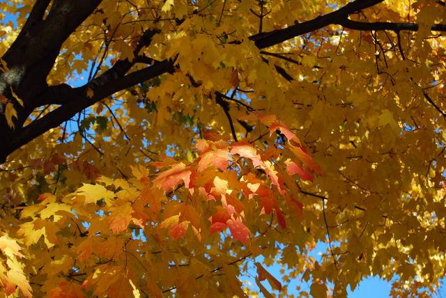 Leaves0001_19