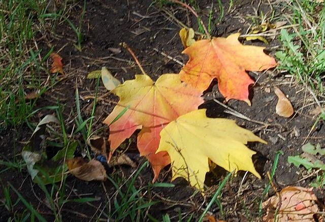 Leaves0001_20