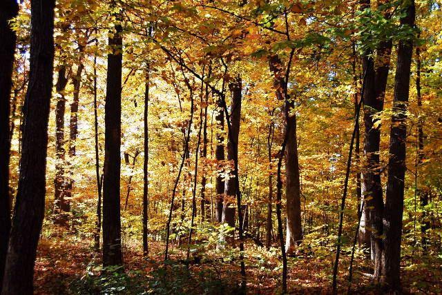 Fall_2007_1