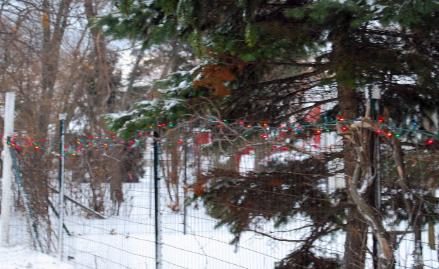 Winter0001_3